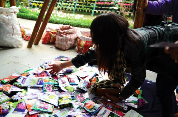 A buyer takes her pick of imported  seeds.