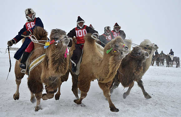 Contestants race camels during a winter Naadam event in Hulun Buir, north China's Inner Mongolia Autonomous Region.