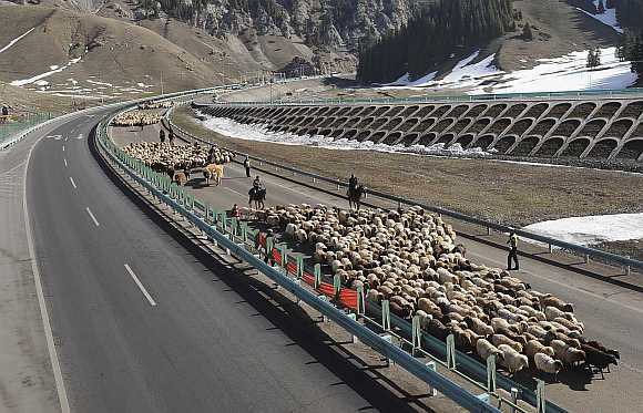Shepherds lead their flocks of sheep and cattle along on the Guozigou segment of the Lianyungang-Horgos expressway as vehicles drive past the other side of the expressway, in Xinjiang Uyghur autonomous region.