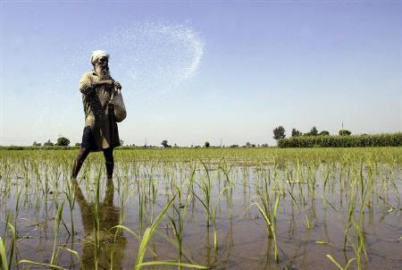 A farmer casts pesticides on his rice paddy field on the outskirts of Amritsar.