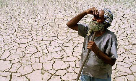 A farmer looks towards the sky, while standing amidst his drought-stricken crop.