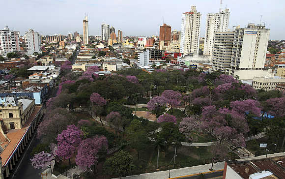 Lapacho trees, Paraguay's national tree, in bloom in Asuncion, Paraguay.