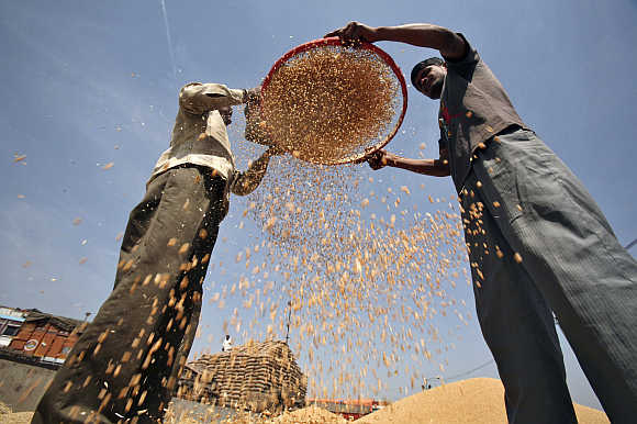 Labourers sift wheat crop at a wholesale grain market in Chandigarh.