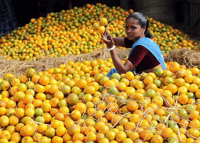 A labourer collects oranges at a wholesale fruit market in Siliguri.