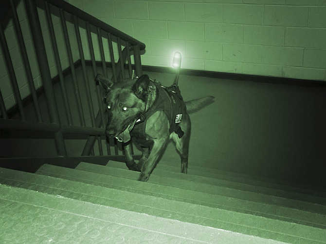 A military working dog outfitted with its own equipment and light heads up the steps of a building in this handout image from the Canadian company K9 Storm Inc.