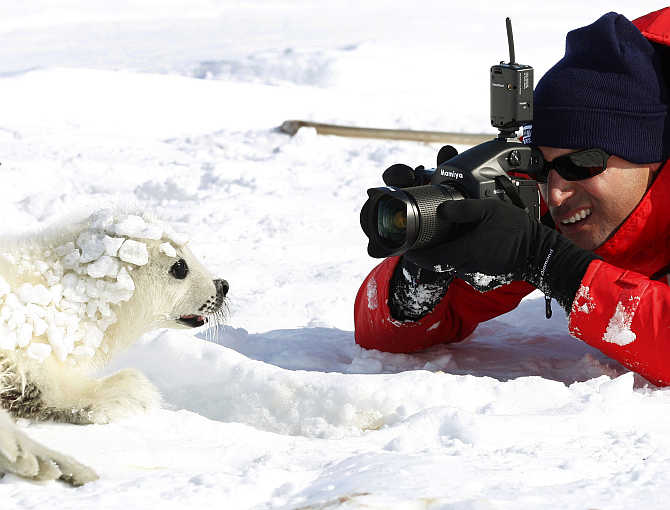Nigel Barker photographs a harp seal pup on an ice floe in the Gulf of St Lawrence in Canada.