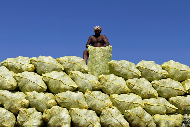 A labourer unloads bags filled with cabbage from a supply truck at a vegetable wholesale market in Chennai.