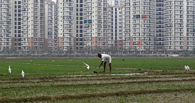 A farmer works in a wheat field against the backdrop of residential apartments undergoing construction in Noida on the outskirts of New Delhi.