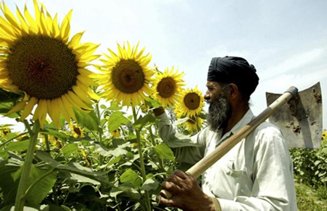Land distribution: Jairam Ramesh bowls a googly