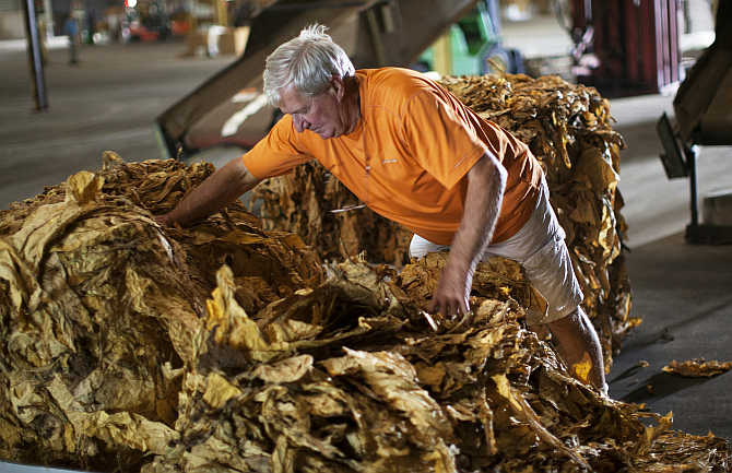 A farmer inspects a bale of tobacco at the Big L Warehouse in Mullins, South Carolina, United States.