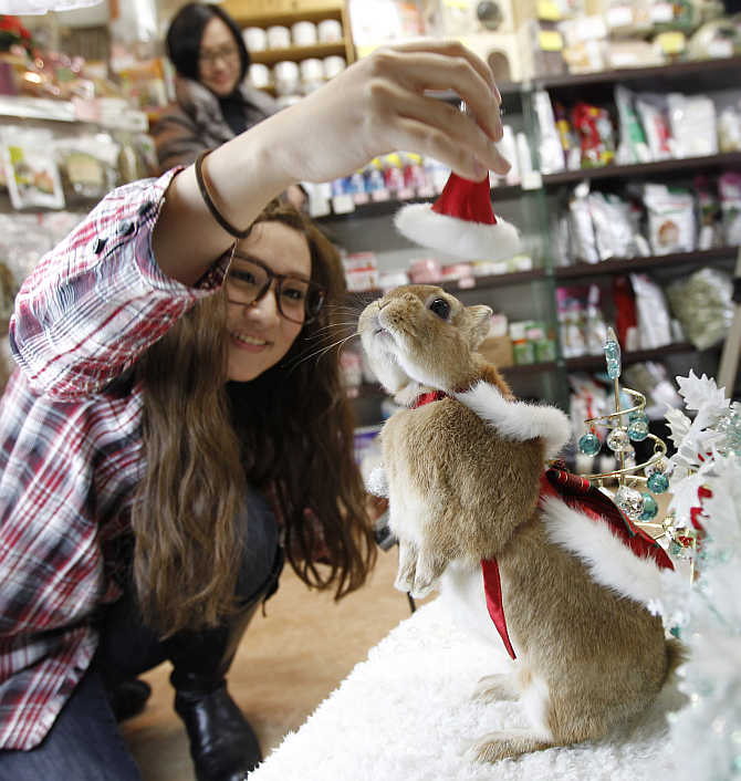A woman tries to put a Santa hat on her pet rabbit at a photo event to celebrate Christmas and the Year of the Rabbit in Yokohama, south of Tokyo, Japan.