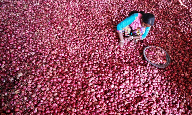 A labourer spreads onions for sorting at a wholesale vegetable market in Chandigarh.