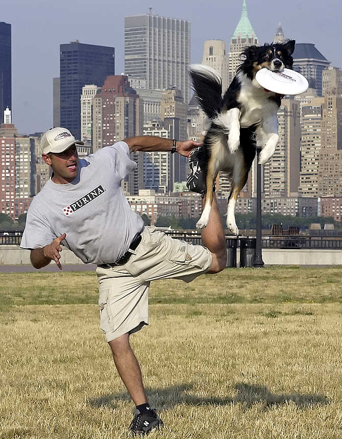 John Casey from Cincinnati, Ohio, and his five-year-old border collie Australian mix, Hyper Hannah, practise for the flying disk competition in the Purina Incredible Dog Challenge at Liberty State Park in Jersey City, New Jersey.