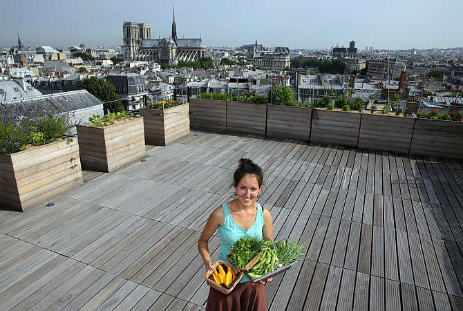 Sibylle, biotechnology engineering student, poses with Orgeval yellow courgettes, chives, parsley, broad beans and spring onions from the vegetable kitchen garden installed on the roof of La Mutualite building in Paris.