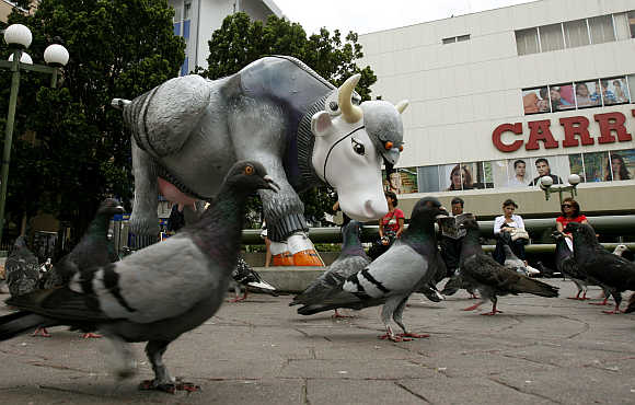 A sculpture called 'The cow pigeon' is displayed as part of the Cow Parade art festival in San Jose.