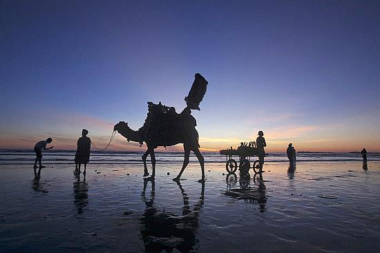 A man sells roasted corn from his cart as another waits to give camel rides to residents visiting Karachi