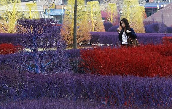 A student walks past trees and bushes painted to beautify the campus, on the first day of the semester at Rangsit University in Bangkok, Thailand.
