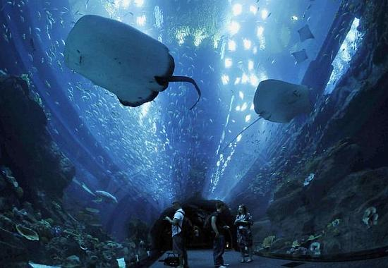 Stingrays swim in the aquarium in Dubai Mall.