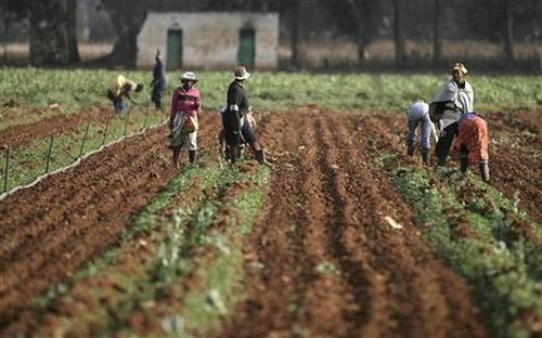 Farm workers are seen at a farm in Africa.
