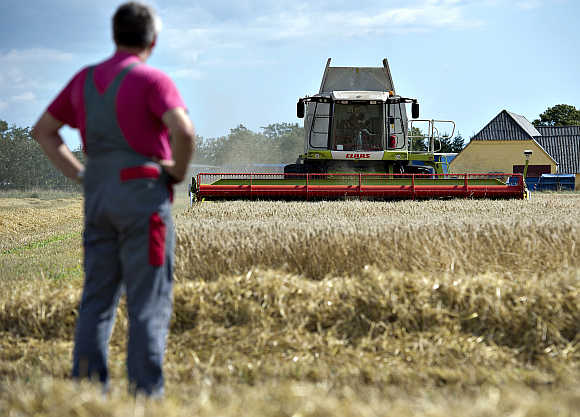 A farmer watches as grain is harvested in Hurup, Jutland, Denmark.