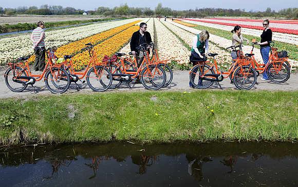 Cyclists visit a Dutch tulip field in Noordwijk.