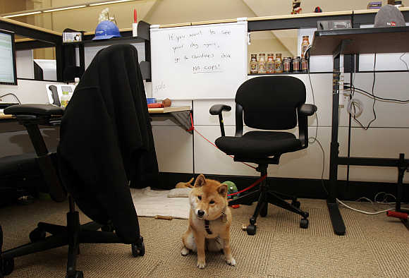 The dog of a YouTube employee sits by a desk at the YouTube headquarters in San Bruno, California.