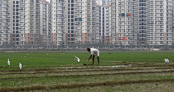 A farmer works in a wheat field against the backdrop of residential apartments undergoing construction in Noida.