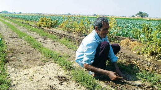 How Saurashtra is driving Gujarat's agricultural growth