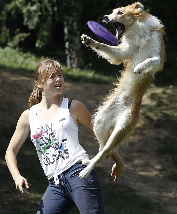A dog catches a frisbee during the Russian dog frisbee championship in Moscow.
