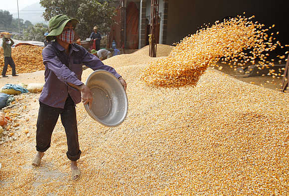 A man throws corn at a factory in Son La province, west of Hanoi, Vietnam.
