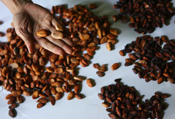 A farmer displays cocoa beans in Pinrang district in Indonesia's South Sulawesi province.