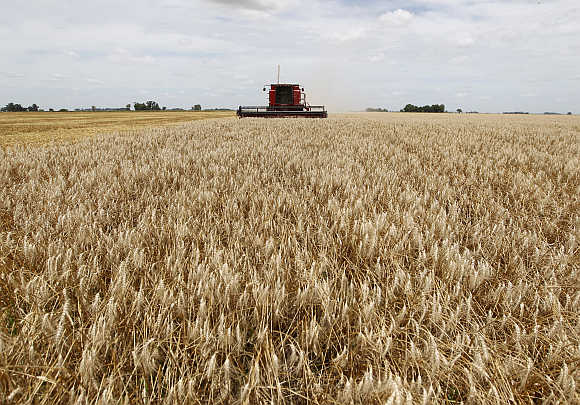 A combine harvester works on a wheat field in General Belgrano, 160km west of Buenos Aires, Argentina.