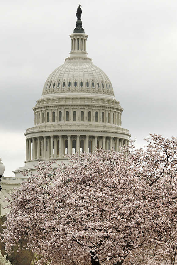 US Capitol Dome seen behind a cherry blossom tree in Washington.