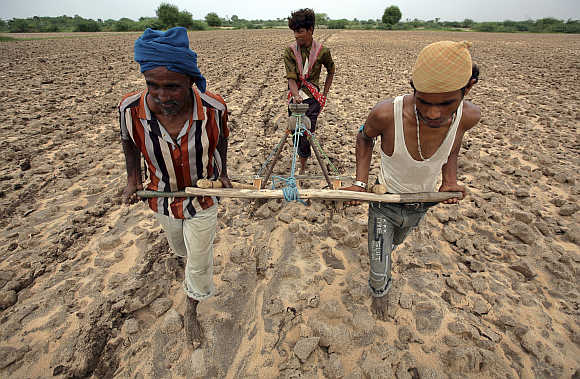 Farmers plough a field before sowing cotton seeds in Kayla village, about 70km west of Ahmedabad, Gujarat.
