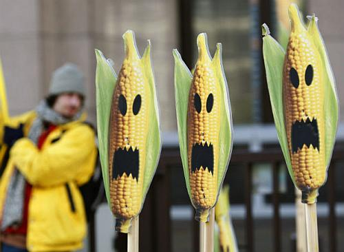 Monsanto's GM corn biosafety data raises concerns