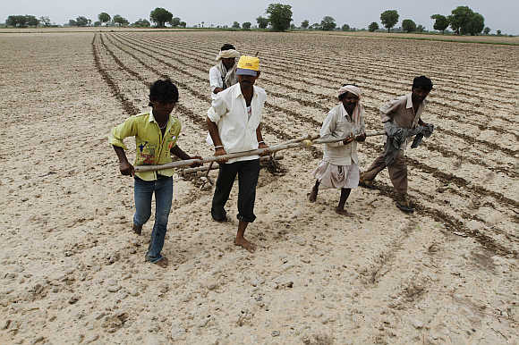 Farmers plough and sow cotton seeds in a field in Shahpur village, near Ahmedabad.