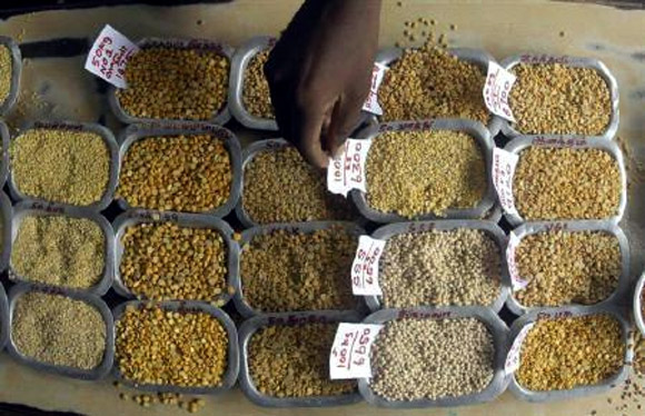 A man arranges price tags on the samples of various pulses at a wholesale market in Chennai.