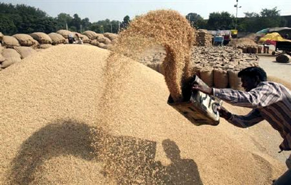 A labourer removes dust from paddy at a grain market in Chandigarh.