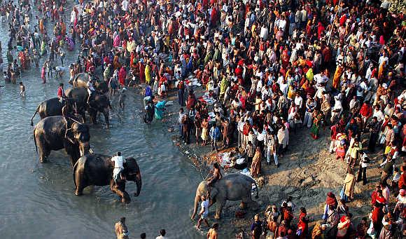 Devotees take a dip in river Gandak during a cattle fair in Sonepur near Patna.