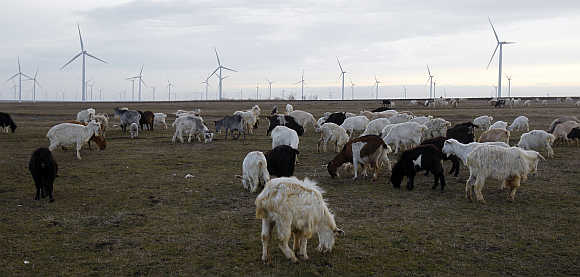 Goats graze on a field next to the turbines of Czech CEZ wind park, Europe's largest on land, in Fantanele and Cogealac villages, about 250km east of Bucharest, Romania.