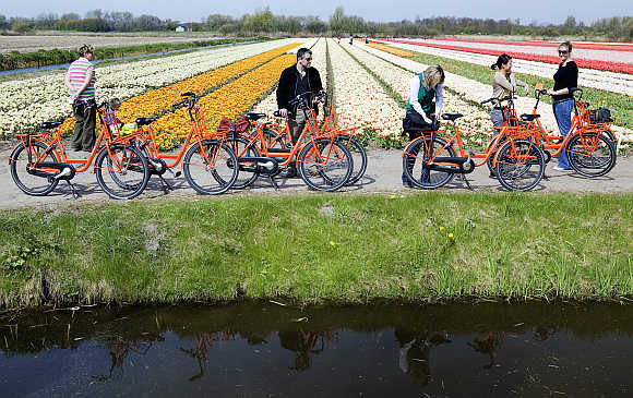 Cyclists visit a tulip field in Noordwijk.