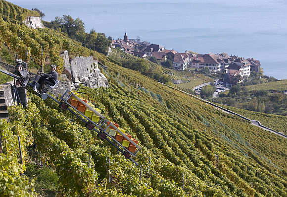 A grape picker uses a monorail to transport grapes in the Lavaux region in Puidoux near Chexbres, Switzerland.