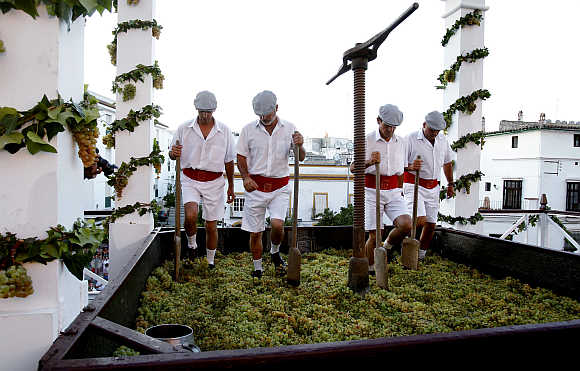 Men tread on grapes in a wooden wine press during the annual grape harvest fiesta in Jerez, southern Spain.