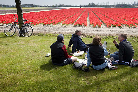 American tourists picnic while enjoying the tulip fields in Noordwijk, the Netherlands.