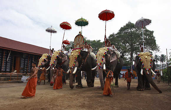 Caparisoned elephants during the annual temple festival in Kochi.