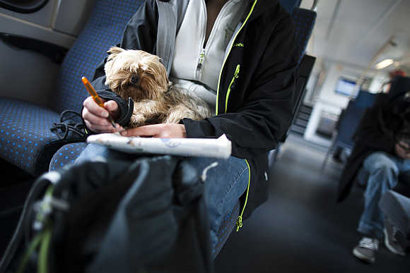A woman holds a dog on her lap on a train near Geneva.