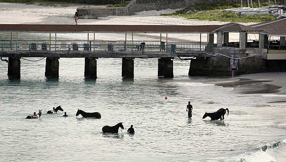 Horses from a local race course are given a morning bath just outside Bridgetown, Barbados.
