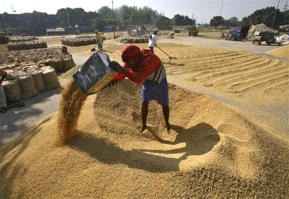 A labourer spreads paddy for drying at a wholesale grain market in Chandigarh.
