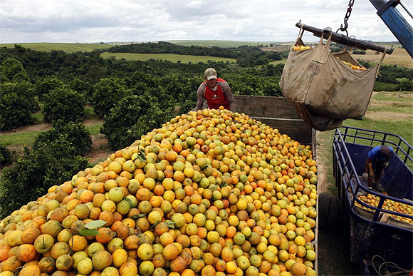 Workers load a truck with oranges on a farm in Limeira.