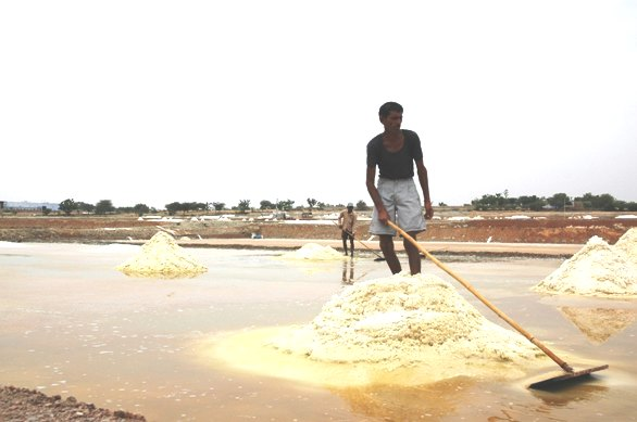 How illegal salt making threatens Sambhar Lake